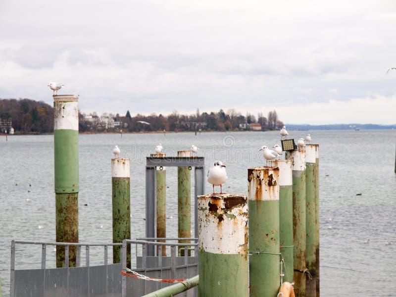 Gaivota empoleirada nos polos da amarração do porto fotografia de stock royalty free