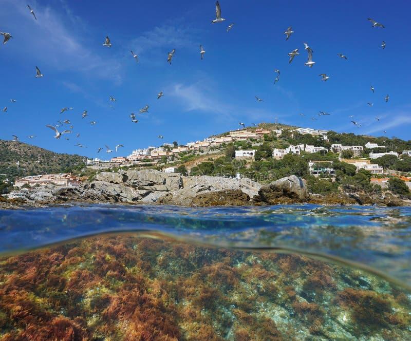 Gaivota mediterrâneas que voam com algas debaixo d'água imagem de stock royalty free