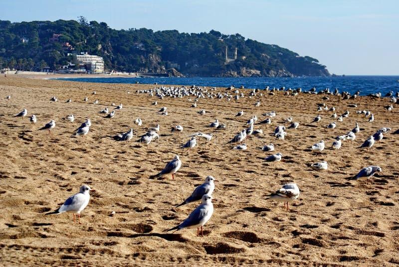 gaivota na areia fotos de stock