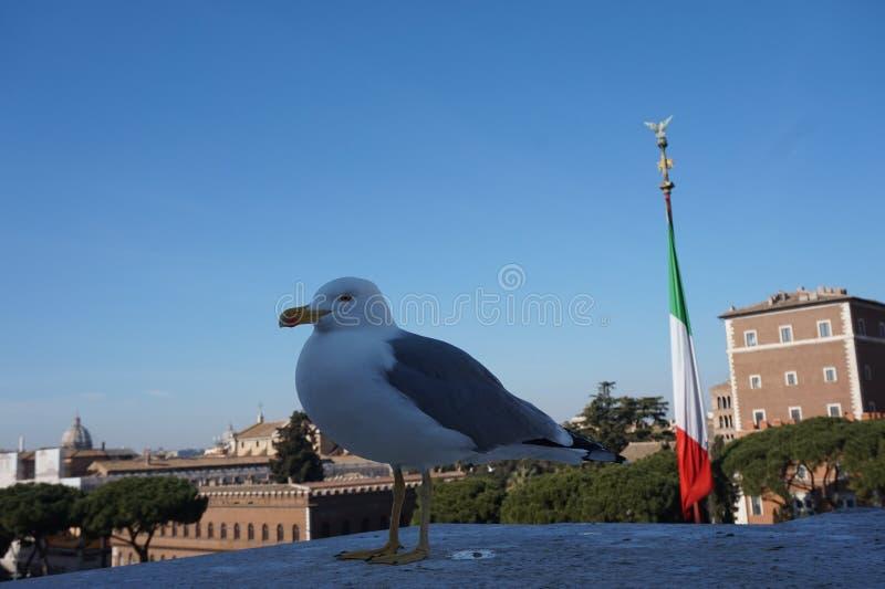 Gaivota na cidade de Roma foto de stock royalty free