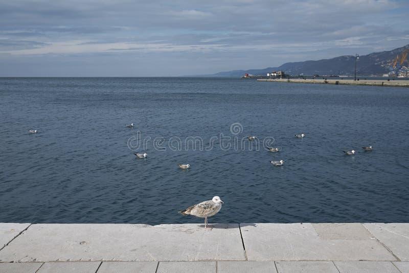 Gaivota no beira-mar de Trieste fotos de stock