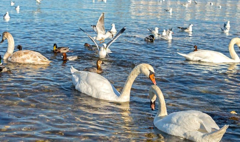 Gaivota, patos e cisnes imagem de stock