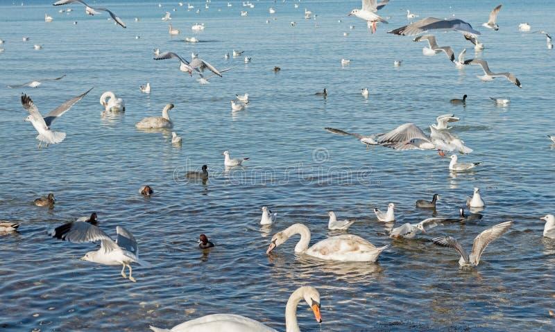Gaivota, patos e cisnes foto de stock