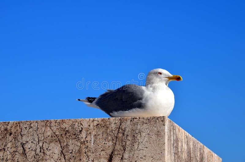 Gaivota que descansa em uma parede do porto fotografia de stock royalty free