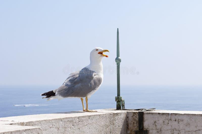 Gaivota que está na borda do aquário de Mônaco do telhado fotos de stock royalty free
