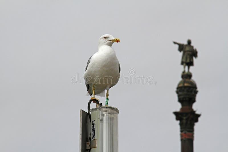 Gaivota que está na lanterna da rua no fundo do monumento de Christopher Columbus em Barcelona imagens de stock