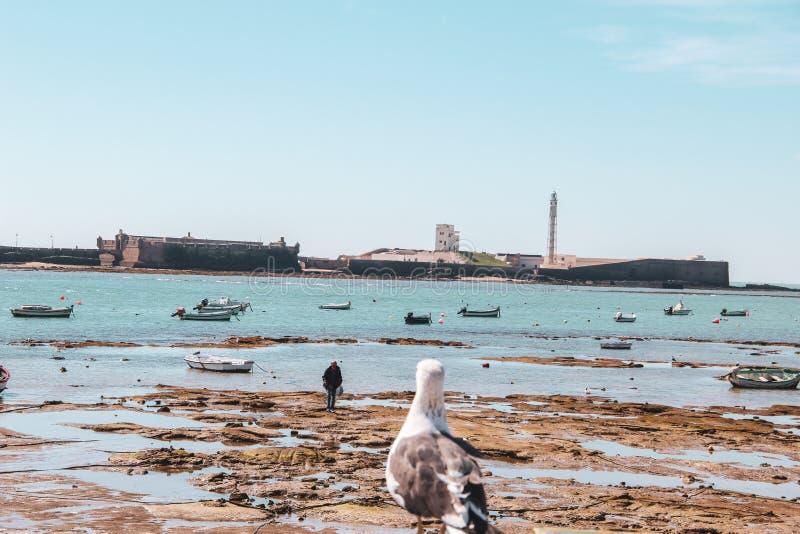 Gaivota que olha a um homem em Cadiz na Andaluzia, Espanha foto de stock