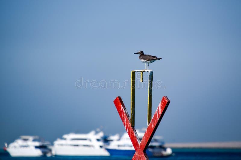 Gaivota que senta-se no porto em Egito foto de stock