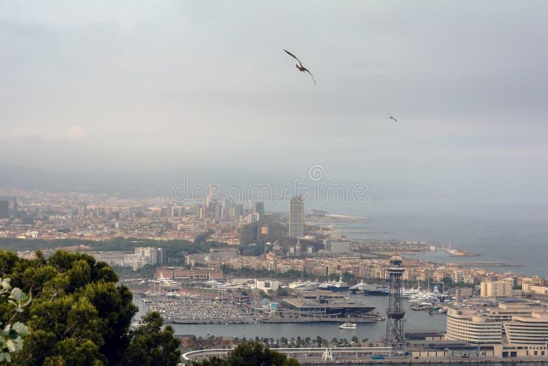 Gaivota que voa sobre a cidade de Barcelona fotos de stock