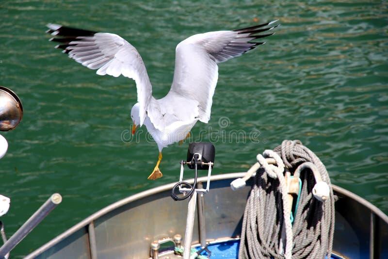 Gaivota que voa sobre o mar Mediterrâneo fotos de stock royalty free