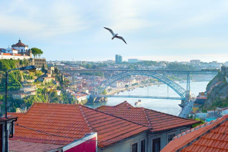 Gaivota que voa sobre Porto, Portugal foto de stock