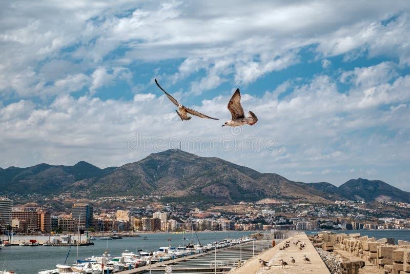 Gaivota que voam sobre o porto fotografia de stock royalty free