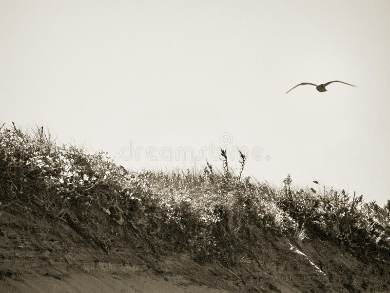 Gaivota sobre as dunas imagem de stock royalty free