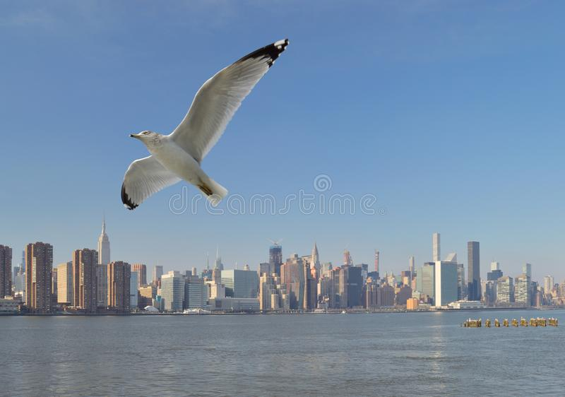 Gaivota sobre um Manhattan fotos de stock