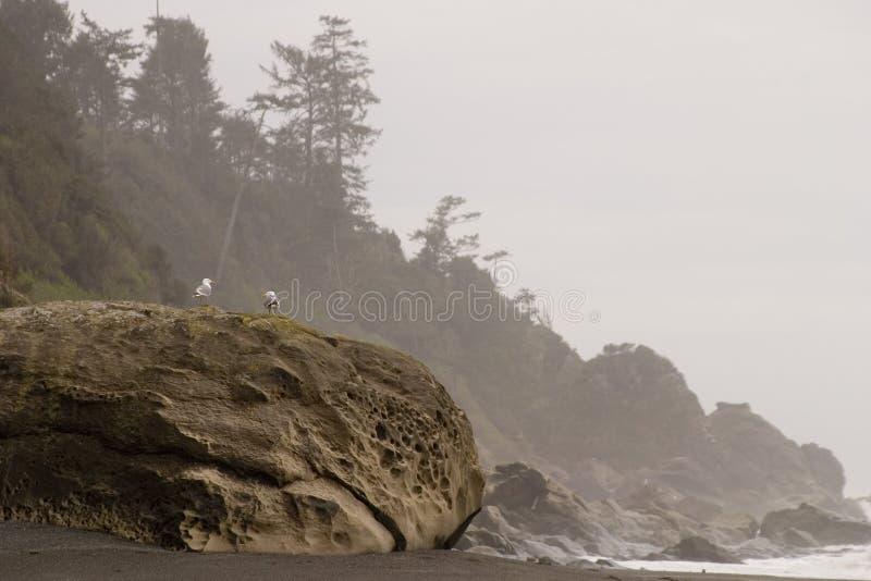 Gaivotas do oceano foto de stock royalty free