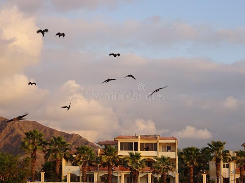 Gaivotas e resort de montanha no contexto em Fujairah em Emiratos Árabes Unidos imagem de stock