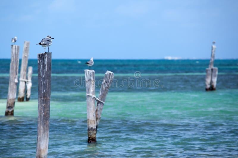 Gaivotas em Cancun imagens de stock royalty free