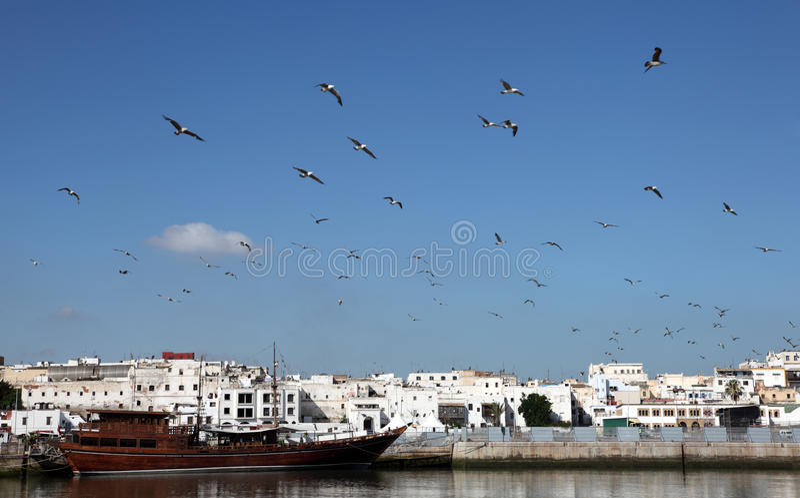 Gaivotas em Rabat, Marrocos foto de stock