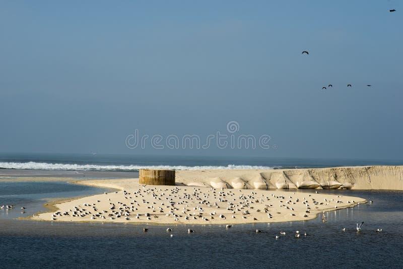Gaivotas na praia de Esmoriz em Portugal imagem de stock royalty free