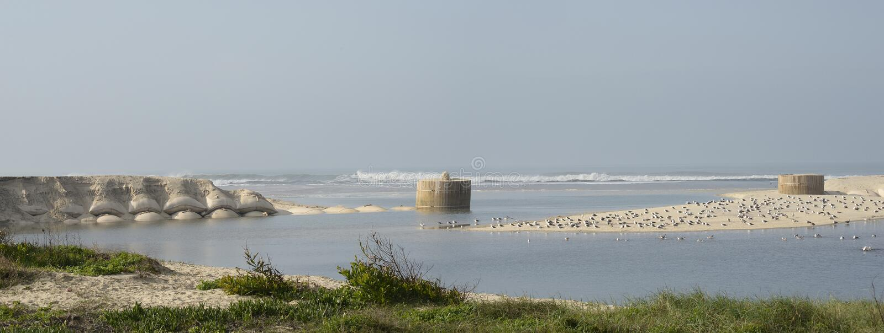 Gaivotas na praia de Esmoriz em Portugal foto de stock royalty free