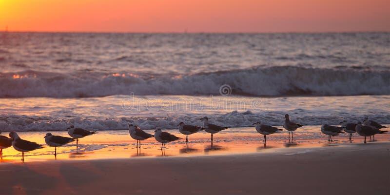 Download Gaivotas na praia foto de stock. Imagem de praia, florida - 29838974