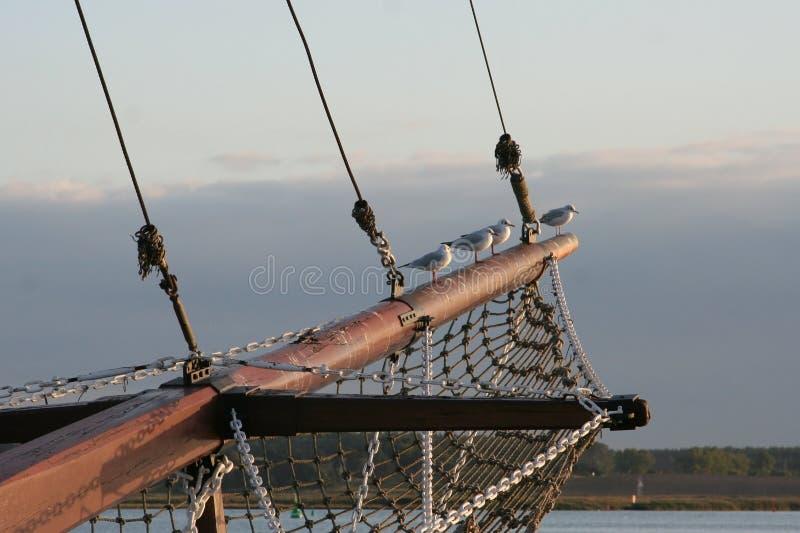 Download Gaivotas No Mastro Do Navio Foto de Stock - Imagem de céu, sailing: 12800914