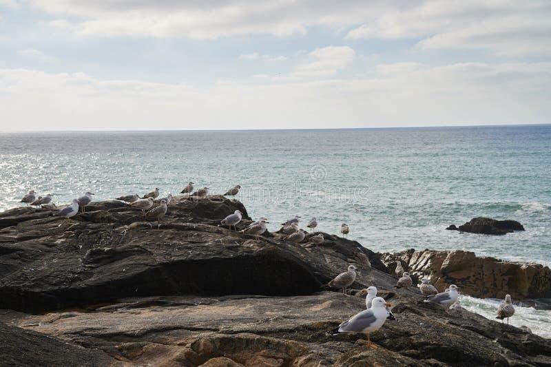 Gaivotas que estão na rocha que negligencia o oceano imagem de stock