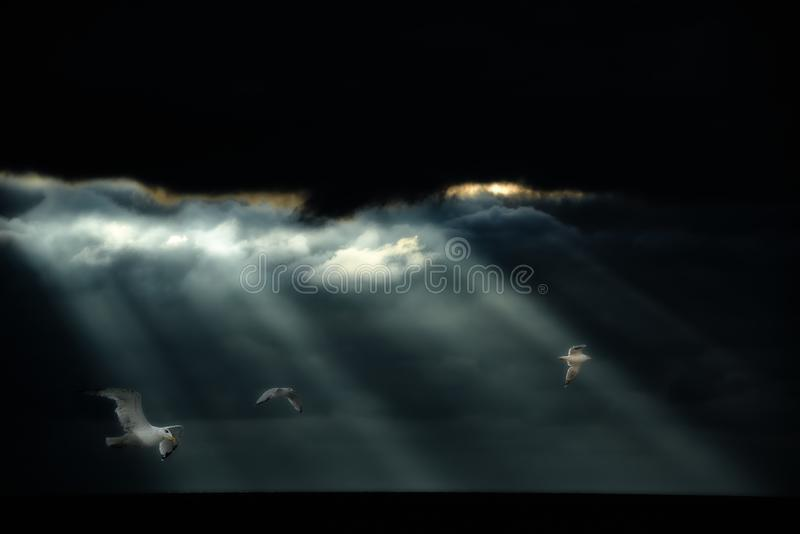 Gaivotas que voam após a tempestade pesada sobre o oceano Alguns raios de sol que vêm através das nuvens e iluminam gaivotas