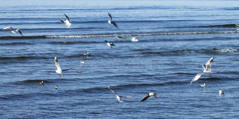 Gaivotas que voam sobre o mar foto de stock