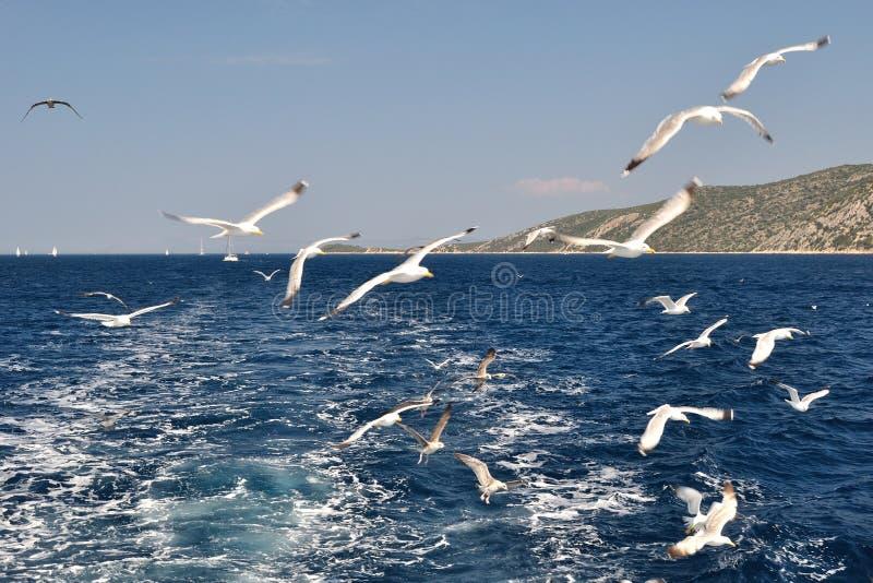 Gaivotas que voam sobre o mar atrás do navio imagens de stock