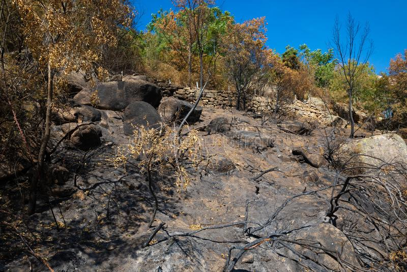 Gaj palił po tym jak pożarniczy blisko Madryt i żywi drzewa w Camorza wąwozie zdjęcia royalty free