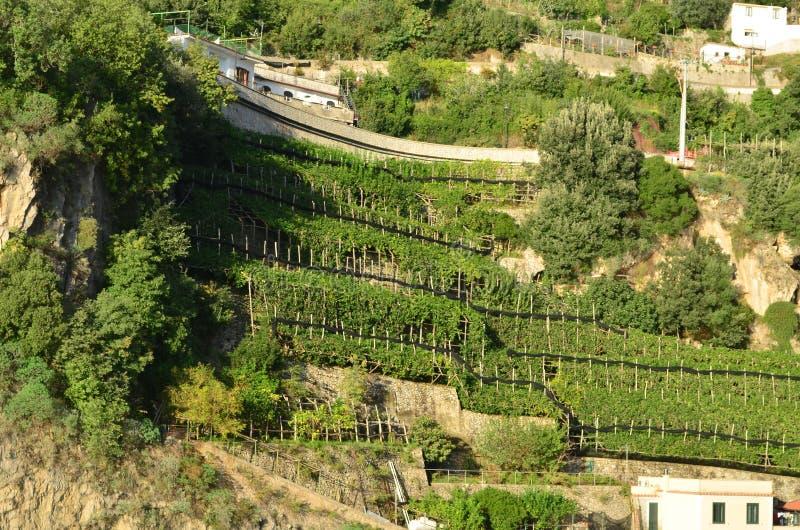 Gaje i winnicy Wzdłuż Tarasowatych wzgórzy Amalfi zdjęcia stock