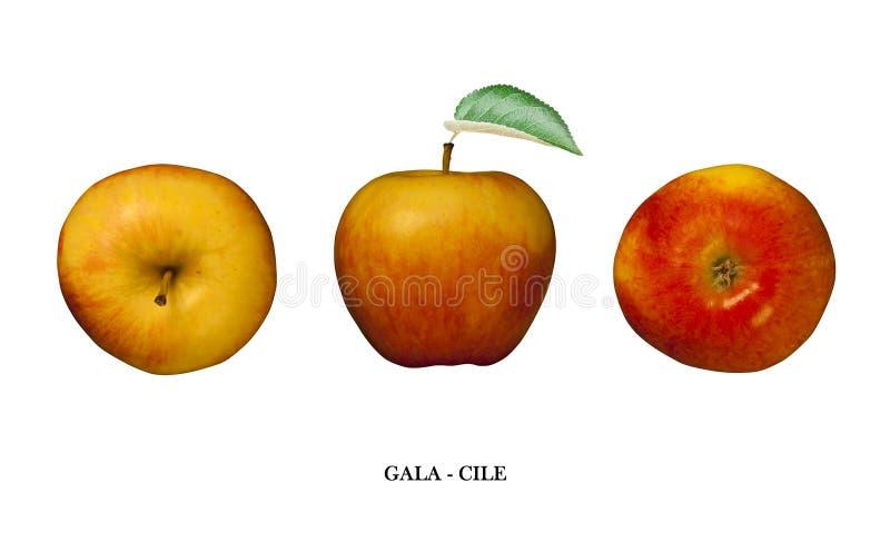 Galà di Apple (Cile) isolato su bianco Tre punti di vista illustrazione di stock