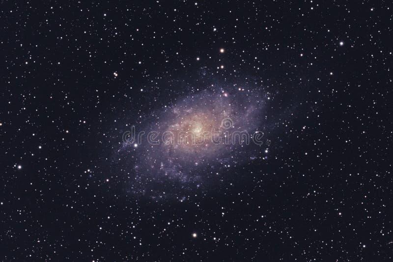 Galáxia de M33 Triangulum fotografia de stock royalty free