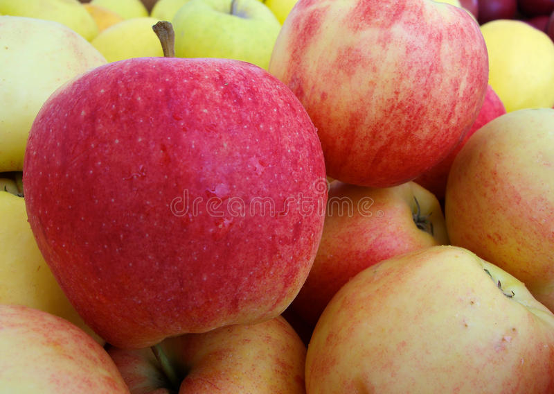 Gala Apples lizenzfreies stockbild