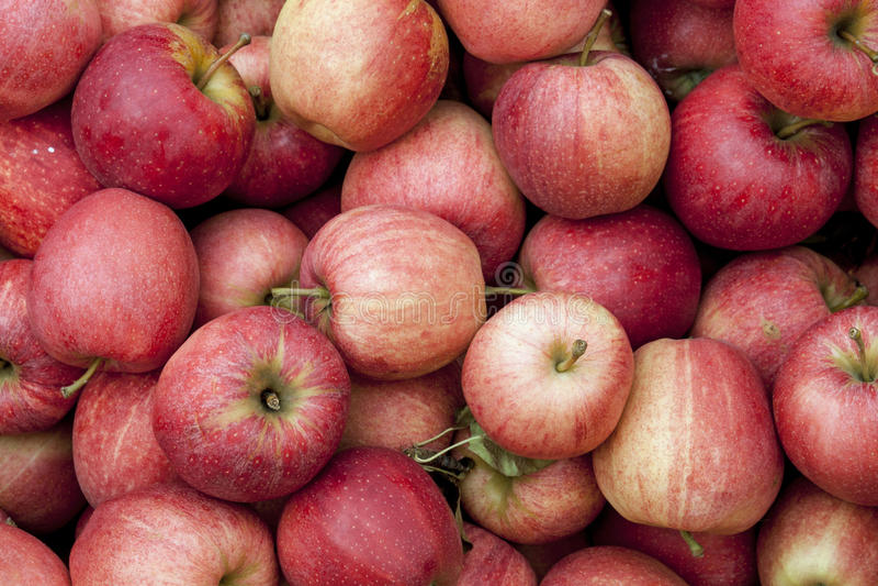 Gala Apples royaltyfri fotografi