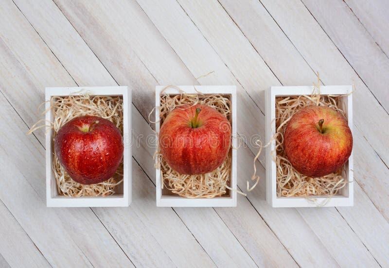 Gala Apples em Mini Crates imagens de stock royalty free