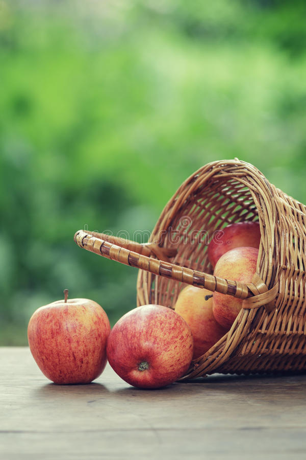 Gala apples in a wicker basket. Vintage edition stock image
