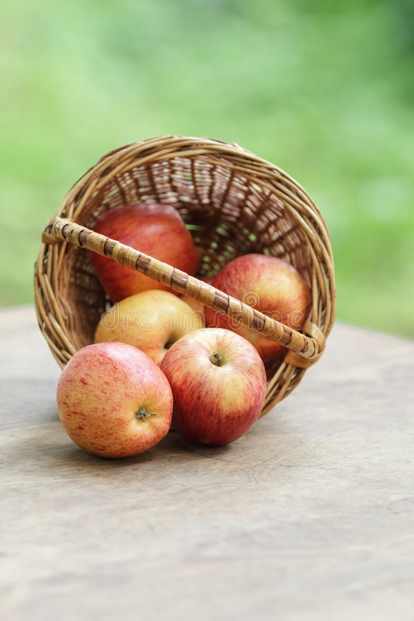 Gala apples in a wicker basket. On wooden table stock images