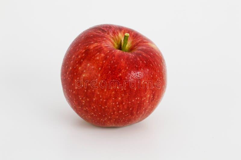 Gala roja de la manzana cubierta con rocío de la mañana fotografía de archivo