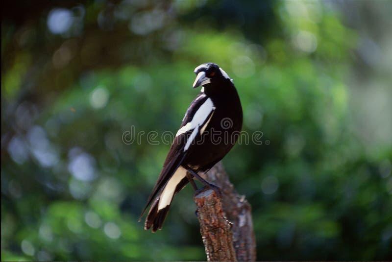 Download Galande arkivfoto. Bild av utomhus, flyg, green, skog, solljus - 279754