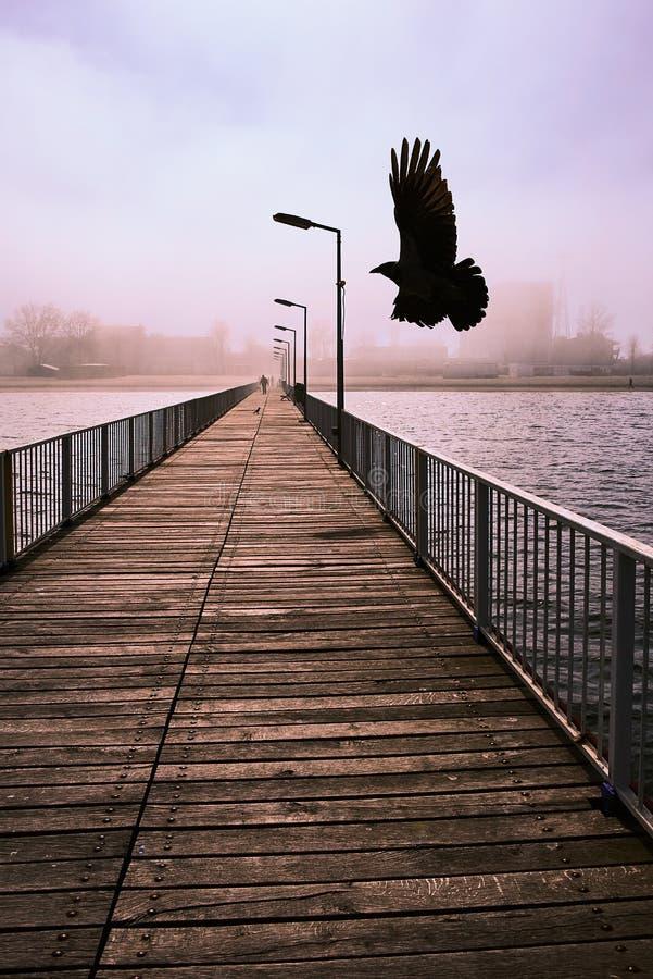 Galande fågelfluga över en bro på Blacket Sea arkivbild