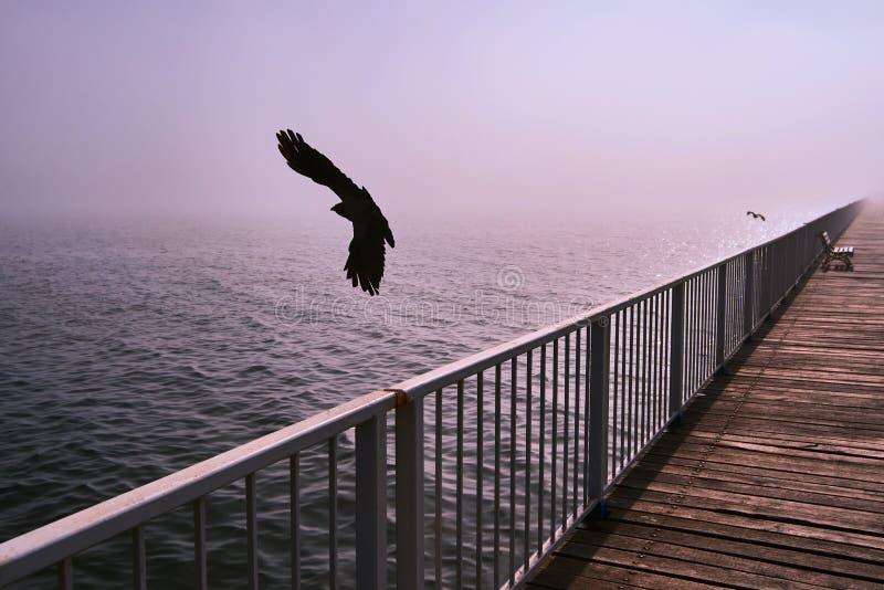 Galande fågelfluga över en bro på Blacket Sea i en disig dag royaltyfria bilder