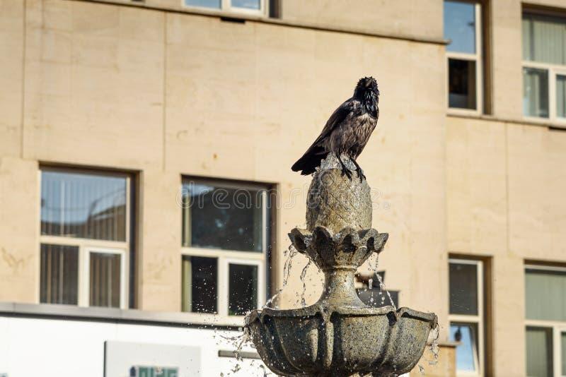 Galande på springbrunnen i Teheran iran arkivfoton