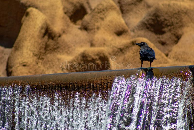 Galande som överst står av en vattenfall fotografering för bildbyråer