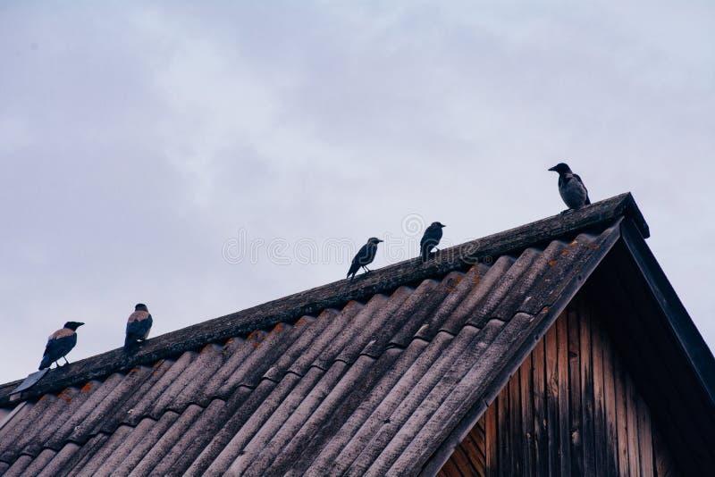 Galanden sitter på taket av huset i molnigt väder arkivbild