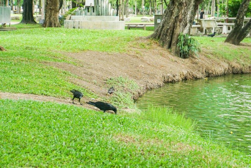 Galandet på gård nära dammet i gräsplan parkerar royaltyfri foto