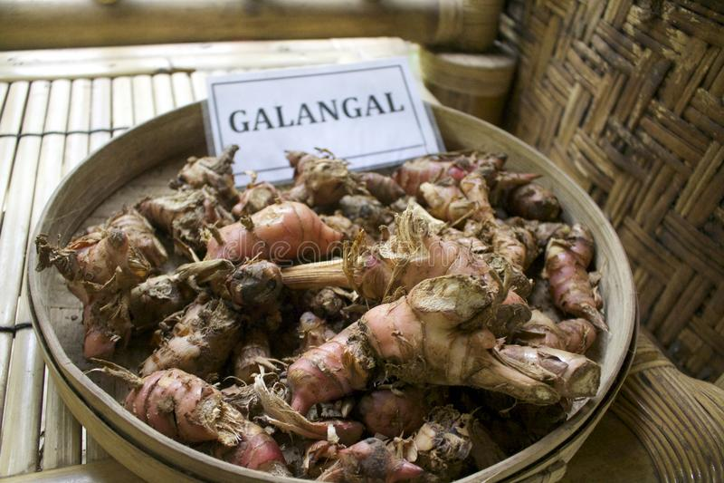 Galangal del café de Luwak del Balinese foto de archivo
