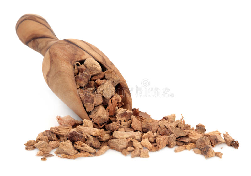 Download Galangal Root stock image. Image of wood, treatment, wooden - 27193247