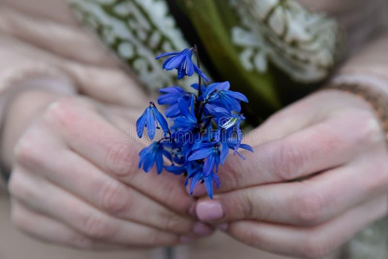 Galanthus ou o snowdrop florescem à disposição fotografia de stock royalty free